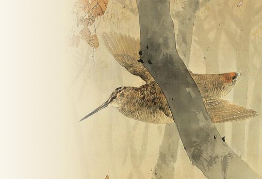 Seitei's Rival, Araki Jippo: Woodcock