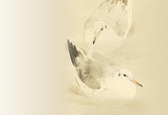 白の静と黒の動:都鳥