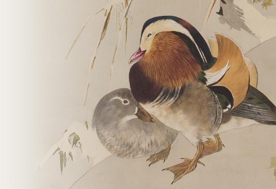 省亭の色彩感覚:雪景鴛鴦図