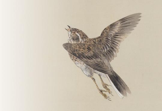 片翼の不思議:四季の花鳥の図/春の部