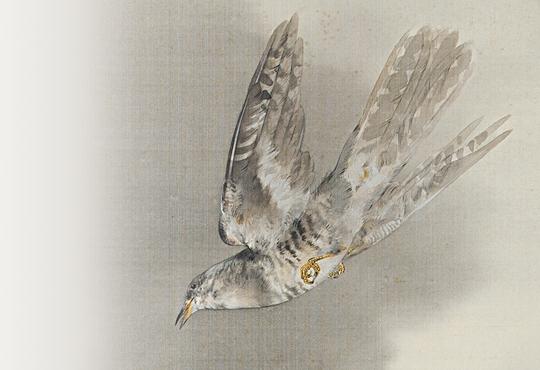 写真を超えた絵画:時鳥