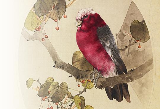 異例な外国産鳥類:淡紅鸚哥に科木